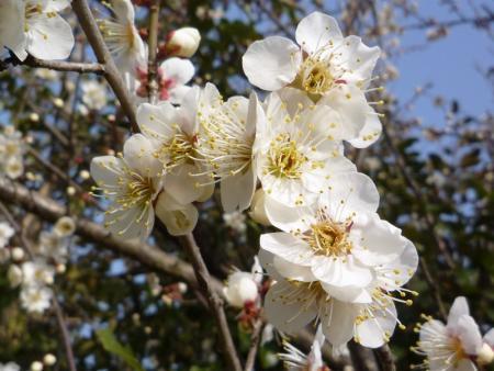 s-090212hukuyama 006